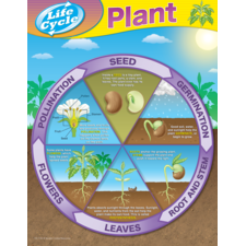 Plant Life Cycles Chart