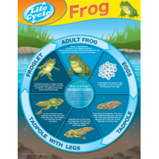 Frog Life Cycles Chart