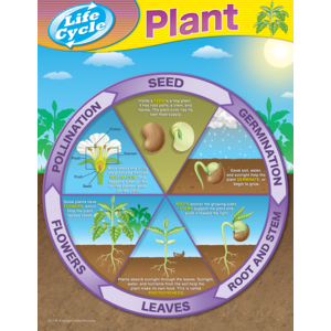 TCR7714 Plant Life Cycles Chart Image
