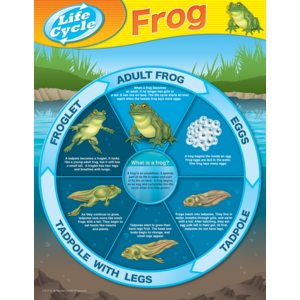 TCR7713 Frog Life Cycles Chart Image