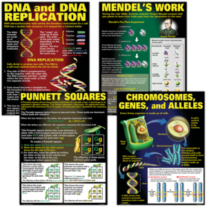 TCRP128 DNA & Heredity Poster Set Image