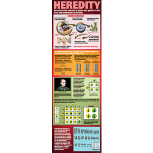 TCRV1708 Heredity Colossal Poster Image
