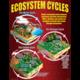 Ecosystems Poster Set Alternate Image D