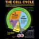 Cells Poster Set Alternate Image B