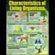Living Organisms Poster Set Alternate Image C