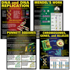 DNA & Heredity Poster Set