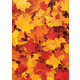 Fall Leaves Better Than Paper Bulletin Board Roll Alternate Image A